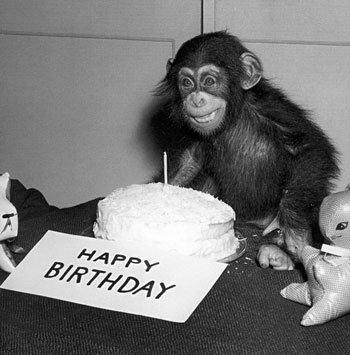 Happy-Birthday-Chimp