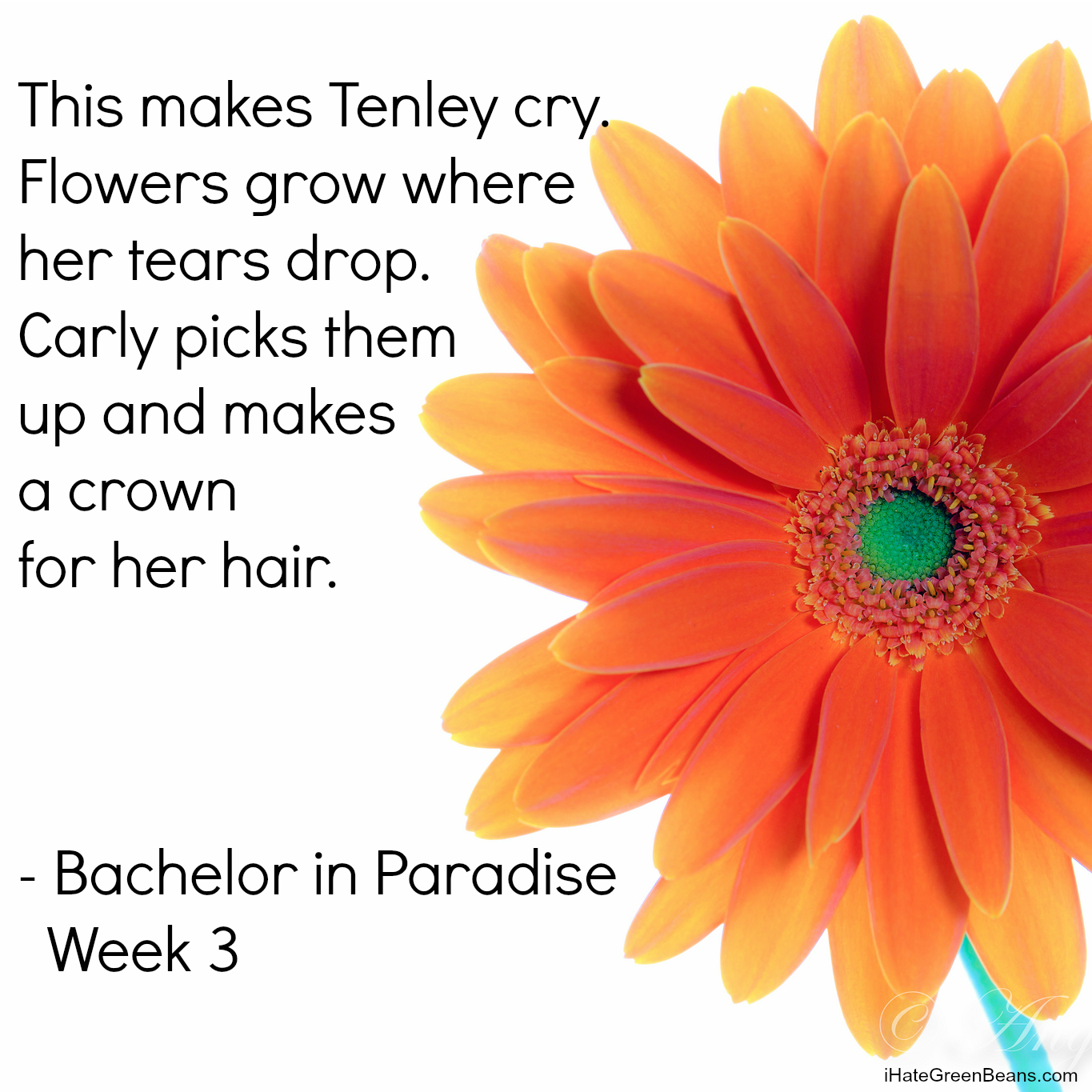 Bachelor in Paradise Week 3