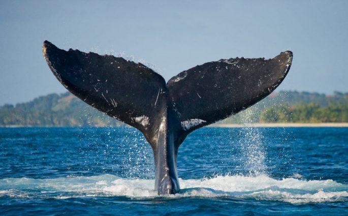 Whale Jonah